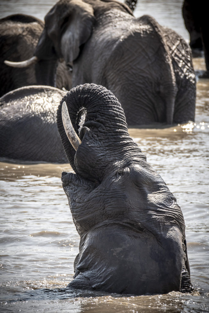 Play in the water – South Africa