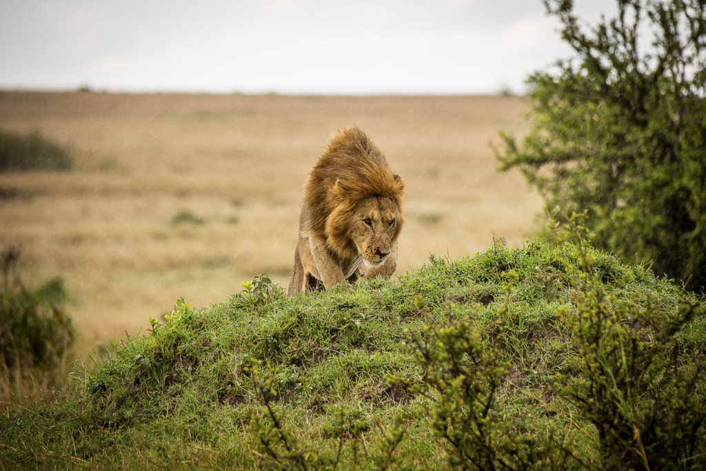 King on the hill – Kenia