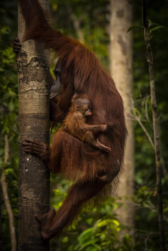 Hold on – Borneo
