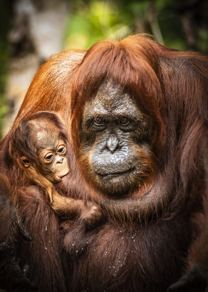 Feed my sweet love – Borneo