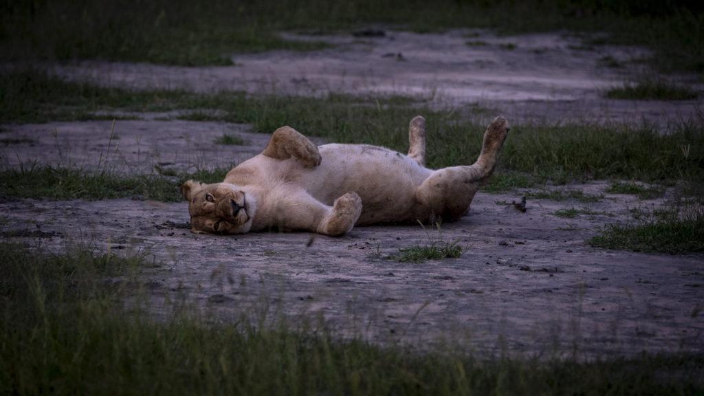 Chilling on my back – Botswana