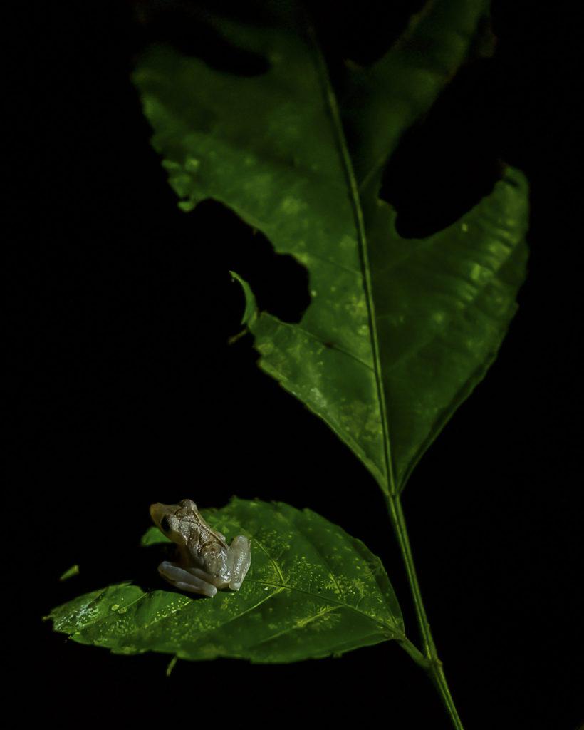 Look into the night – Borneo