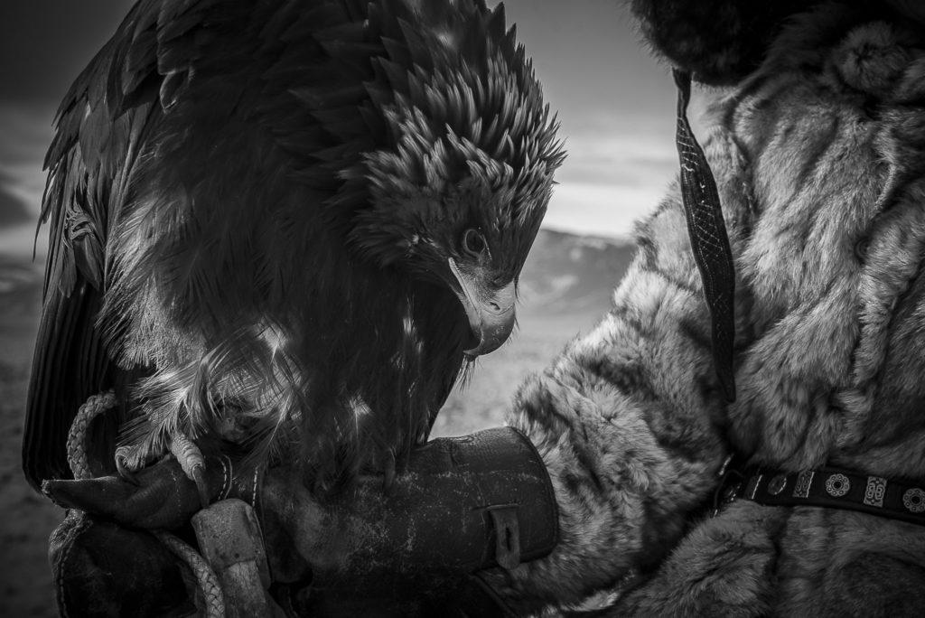 Man's Eagle – Mongolia