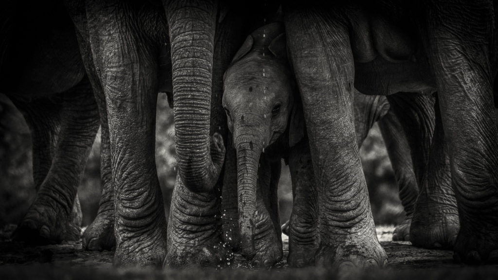 Protection – South Africa