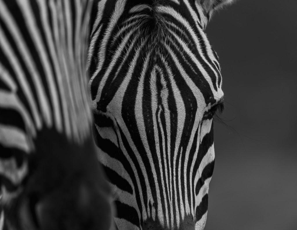 The head – Botswana