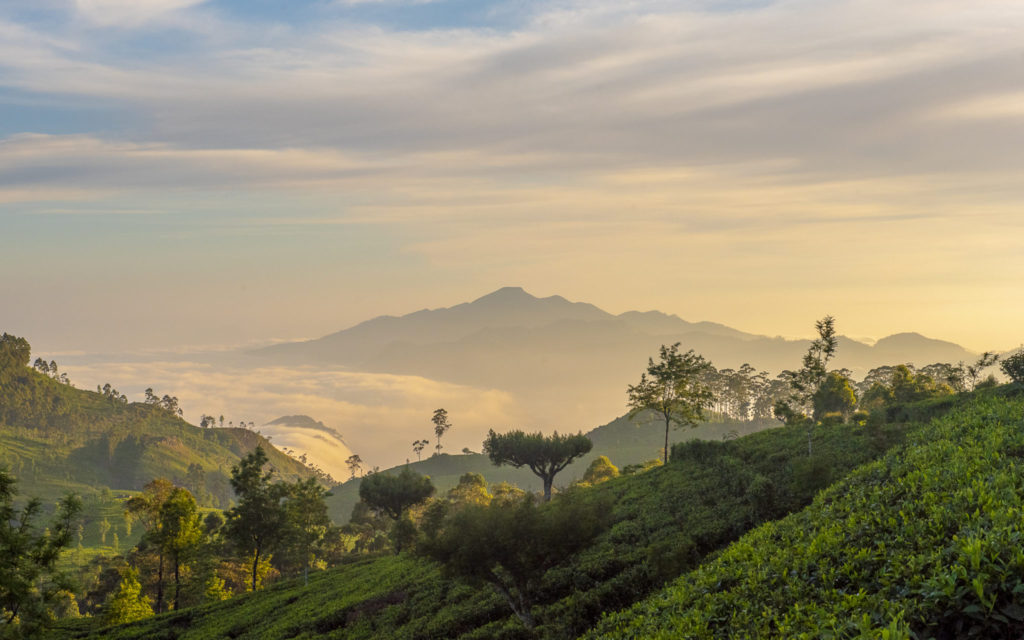 From Liptons seat – Sri Lanka