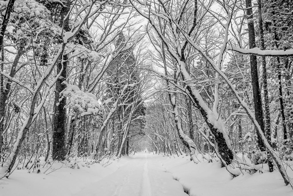 Road in the snow – Japan