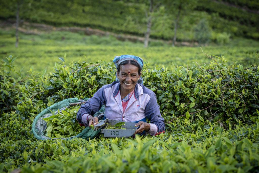 Lovely tea picker – Sri Lanka