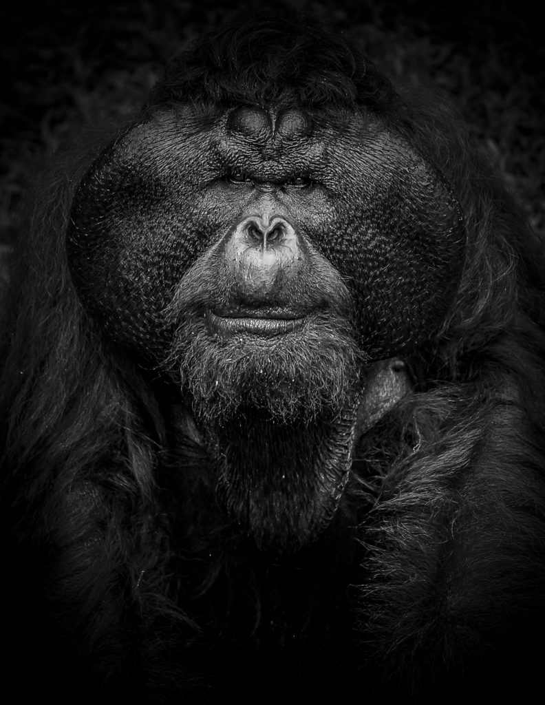 The Male – Borneo