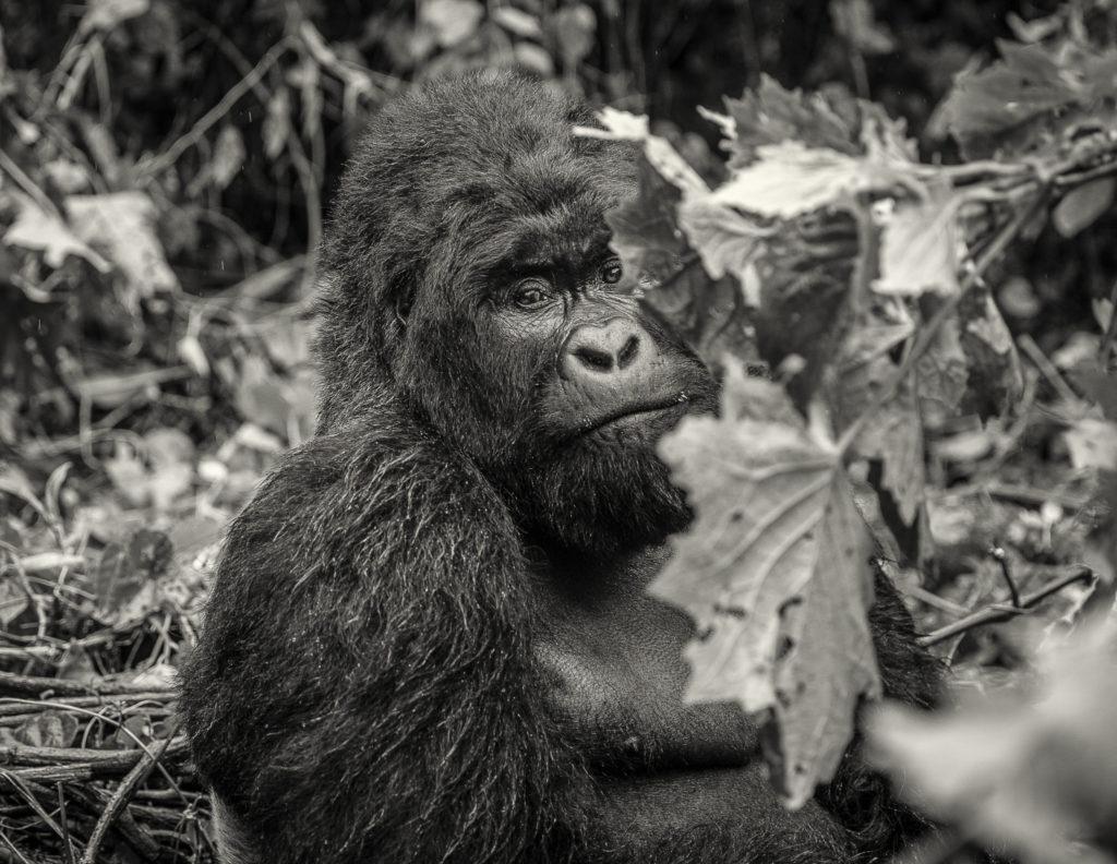 Behind the leaves – DRC