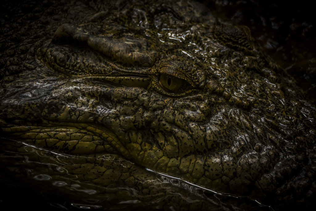Eye of the Croc