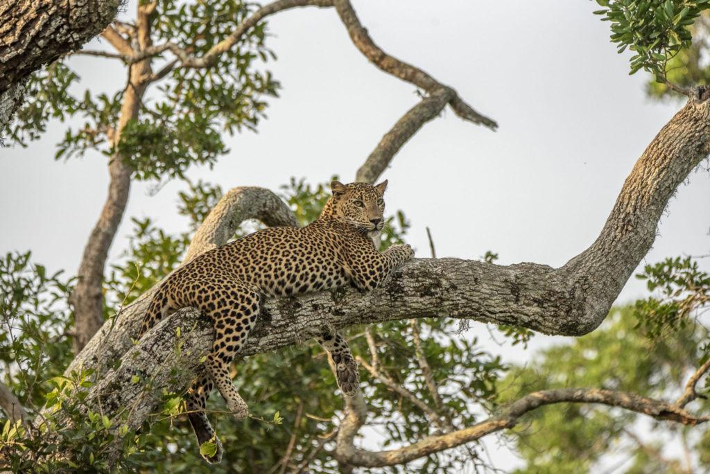 Chilling in the tree – Sri Lanka