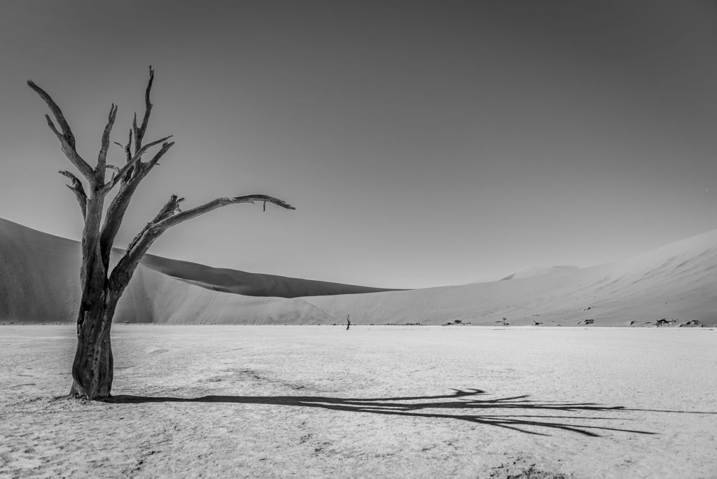Tree in the shadow – Namibia