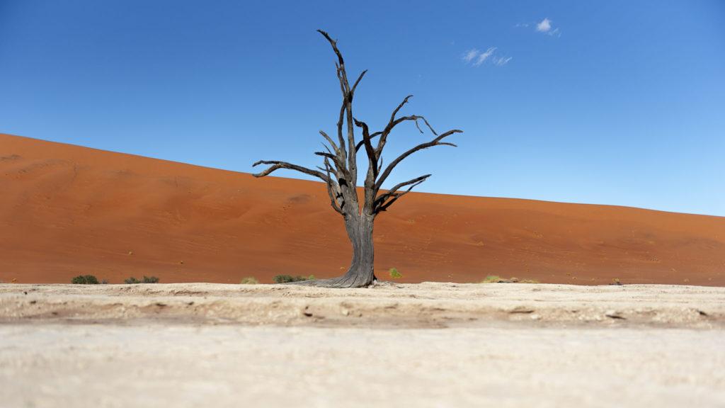Silent tree – Namibia
