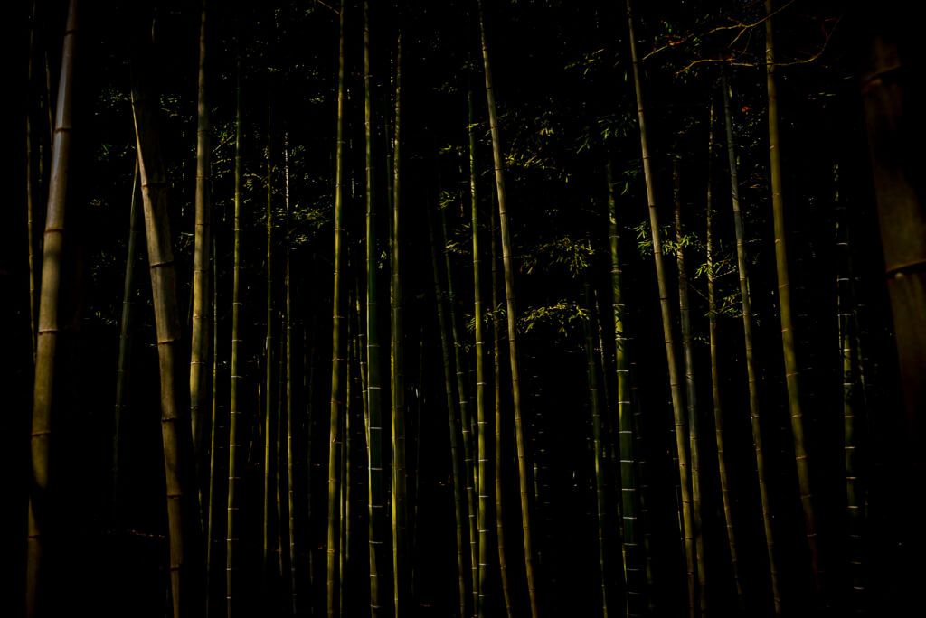 Bamboo forest – Japan