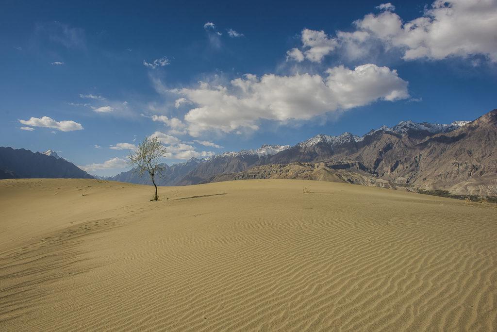 Lonely tree – Pakistan